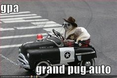 Funny pug pictures With Captions - Bing Images Visit our website now! Funny Pug Pictures, Pug Photos, Funny Dog Captions, Funny Dog Memes, Puppy Pictures, Funny Dogs, Funny Animals, Cute Animals, Pug Pics
