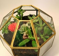 Turn an old pendant light fixture into a succulent terrarium