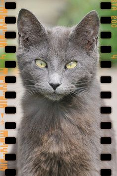 #Cat[s] Update!  Like,Repin,Share, Thanks!