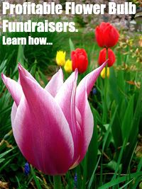 Flower Bulb Fundraisers are fantastic fundraising products for Schools, Churches, Societies, and Clubs. Learn how to have a super profitable fundraiser with them...  http://www.rewarding-fundraising-ideas.com/flower-bulb-fundraisers.html  (Photo by Mark Banks / Flickr.com)