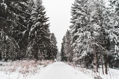 Free Image: Snow Covered Road and Trees | Download more on picjumbo.com!