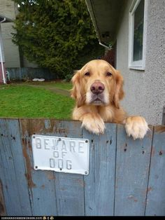beware of dog, he may kill you with love