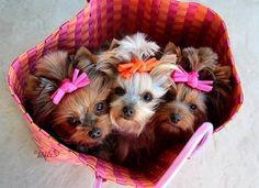 Sweeties