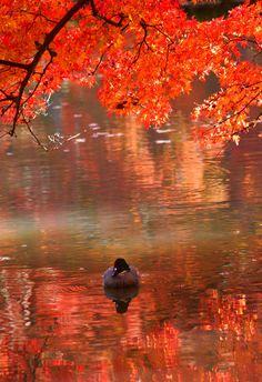 Photo was taken in The Kyoto Botanical Garden