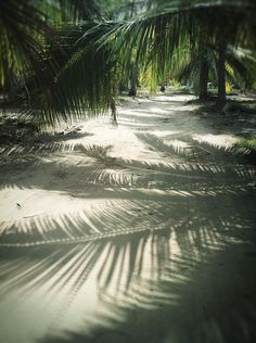 Palm Shadows in Mexico