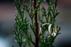 golden wedding rings| wedding | Hochzeitsblog marryMAG| Der… Ring Verlobung, Silver Rings, Wedding Rings, Jewelry, Beautiful Wedding Rings, Newlyweds, Engagement Ring, Silver, Nice Asses