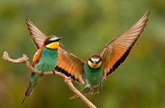 lovely birds - Google Search