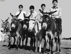 Beatles on donkeys