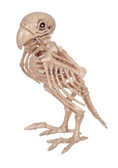 http://images.halloweencostumes.com/products/39220/1-2/skeleton-parrot.jpg