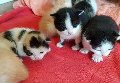 Hübsche, verschmuste Katzenbabies abzugeben 25145510 Cats, Animals, Animales, Gatos, Animaux, Animal, Cat, Animais, Kitty