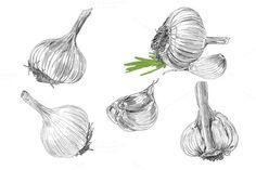 Hand drawn illustrations of garlic by golubok's goods on Creative Market