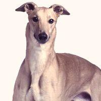 The Best Dog Breeds for Older People - PetCareRx