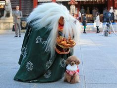 dressedupanimals:    Love the Teacup Poodle posing with a shishi-mai, a lion used in the Shinto new year celebration in Japan.