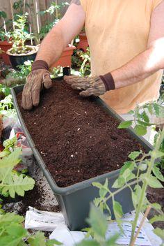 earth box for small gardens