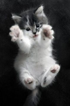 Hug me.......hug me.
