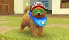 Life with Your Puppy | nintendogs + cats