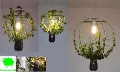 Check out this site for some interesting ways of growing plants with lights!  Pretty neat! Actually the Green Light is a plant grows around an energy saving lamp in a recycled pet-bottle. You can grow it or cut it to dim or brighten the light.