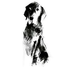 Dog sketches   #dogillustration #dogsketchbook  www.carolinetomlinson.com