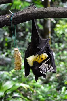 Bat and butterfly both enjoying a piece of fruit