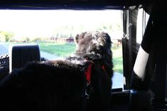 My dog looking out the back window of our Jeep Wrangler. Unfortunately, my dog was almost strangled back there once... because of the type of dog collar we used. See which dog collars are safe and which ones are dangerous! 2004 Jeep Wrangler, Different Types Of Dogs, 2014 Jeep Grand Cherokee, Id Tag, Dog Collars, Safety Tips, Jeeps, Your Dog, Window