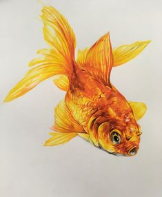 #painting #watercolor #postercolor #기초디자인금붕어 #기초디자인 #goldfish Girly Drawings, 3d Drawings, Animal Drawings, Watercolor Fish, Watercolor Animals, Watercolor Paintings, Golden Fish, Traditional Japanese Art