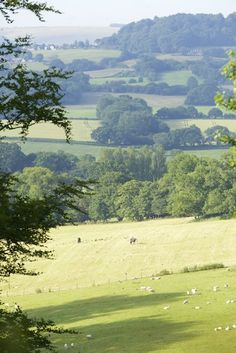Countryside around Hatch House. Photograph Jake Eastham.