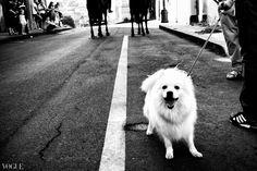 Come fotografare in strada [Street Photography POV]