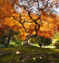 this is a beautiful tree, ive been looking for a tattoo to represent James and since fall is my favorite season, and he was born in October this would be a great back piece