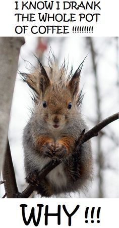 """I know I drank the whole pot of collfee...why!!!""  A squirrel high on coffee with a bad hair day, standing on a thin branch...not a good combination!"
