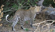 Mombo Camp, Okavango Delta, Botswana - the best way to experience Africa
