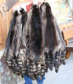 NATURAL BLACK RACCOON - Lots of different skins at Great Prices...  starts at $29.95 for this one.  Lots of choices.