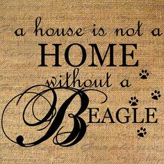 A House Is Not A Home Without A Beagle