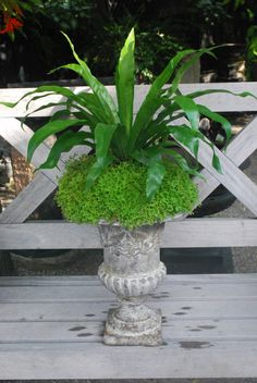 Detroit Garden Works via Dirt Simple Blog.  Deborah Silver landscape and garden designer.  The rooted bricks of selaginella planted on an angle enabled him to present a single bird's nest fern high off this French terra cotta pot.