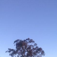 Late afternoon #sky #tree #nature #mindfulafternoon