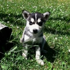 adorable puppy :)