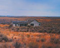 https://flic.kr/p/A3sR7A | Prairie Fodder (Explore 11/12/15) | Waterville Plateau - Douglass County Washington.   Pentax 6x7, Kodak Ektar 100,  Epson V800, Silverfast 8.