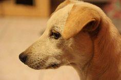 What a beauty #beagle @yummypets
