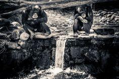 Monos aburridos