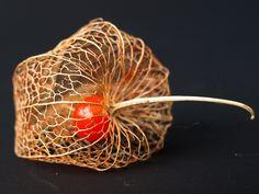 Physalis Alkekengi -el Alquejenje o farolillo chino-: la esfera escarlata.   Matemolivares