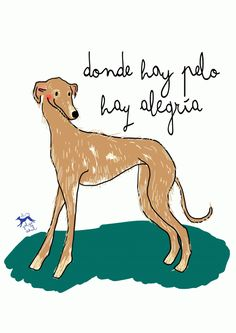 Love Pet, I Love Dogs, Puppy Love, Greyhound Art, Italian Greyhound, Skinny Dog, Hand Pictures, Animal Quotes, Whippet