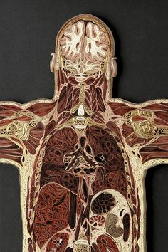 Lisa Nilsson - Coronal Man (detail). Anatomical Cross-Sections in Paper. #quilling #art