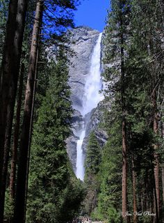 Yosemite Falls, Yosemite National Park, CA  (I wish you could smell the pine and the fresh misty air)