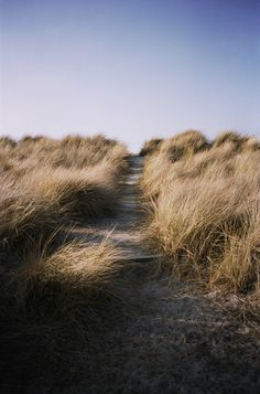 """Beach Grass"" by Brian Ferry"