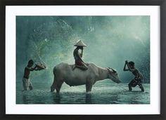 Water Buffalo - Vichaya - 1x - Poster im Holzrahmen