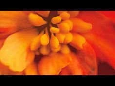 ▶ Everything is Okay - Peaceful Affirmations to Help You Relax - YouTube