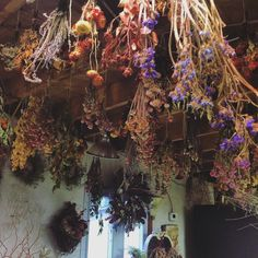 Drying herbs and flowers from the ceiling for home Apothecary. Wiccan, Magick, Witchcraft, Pagan Witch, Witch Cottage, Witch House, Witch Aesthetic, Kitchen Witch, Drying Herbs