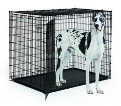 MidWest Extra Large Dog Breed (Great Dane) Heavy Duty Metal Dog Crate w/ Leak-Proof Pan Double Door Giant Dog Crate measures x x Inches & Weighs lbs. Extra Large Dog Breeds, Extra Large Dog Crate, Large Dogs, Small Dogs, Dog Playpen, Pet Kennels, Xxxl Dog Crate, Medium Dog Crate, Medium Dogs