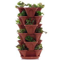 Mr. Stacky Hydrotech - U Pick Strawberry Vertical Farm and Commercial Greenhouse Hydroponic Growing System Supplier - Planters, Strawberries, Nutrients, Media, and More