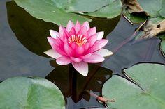 Günlük yoga pratiğimizi nasıl Sādhanā haline getirebiliriz? Yeni blog yazımda en basit ve uygulanabilir haliyle anlatmaya çalıştım. :) Umarım beğenirsiniz.