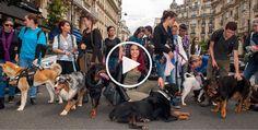 """Quand 300 chiens défilent en plein coeur de Paris pour dire """"NON"""" à l'abandon"""